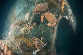Cor-Kuyvenhoven-Noordzeekrabben in staandwandnet