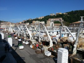 Fishing boats port of Ancona