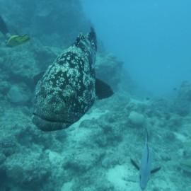 Photo: Erin Jones July 2018, Great Barrier Reef, Port Douglas, Australia.