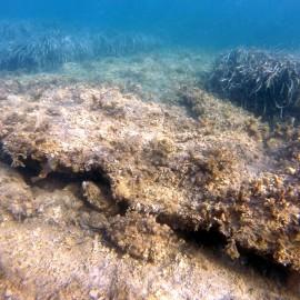Photo: Evagoras A. Isaias Melleha Bay, Ghadira Beach, Malta: Seagrass matte shallow reef, posidonia patches, seagrass Cymodocea nodosa habitat, Cystoseira spp. and other photophilic algae communities growing on dead matte habitat.